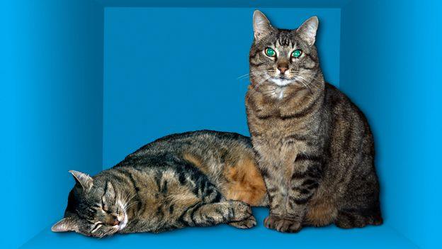 แมวตัวนี้ทั้งตายและยังมีชีวิตอยู่ (เครดิต: Victor de Schwanberg / Science Photo Library)
