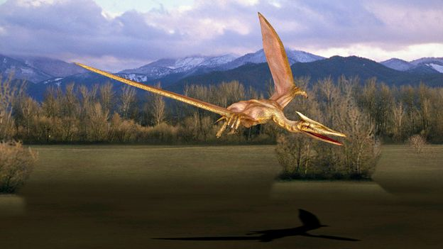 Bbc Earth The Biggest Beast That Ever Flew Had Wings Longer Than A Bus