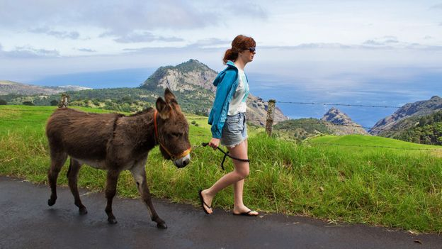 St Helena has set up retirement home for donkeys (Credit: Credit: Diane Selkirk/Evan Gatehouse)
