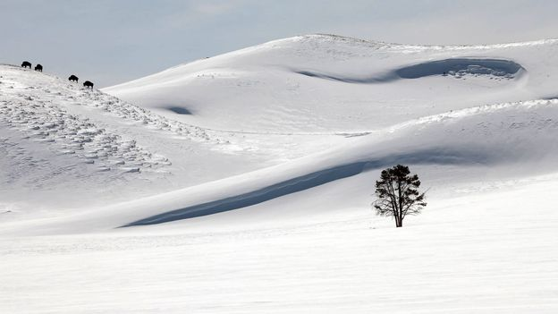 Winter brings balance to Yellowstone's hectic summer season (Credit: Credit: Steven Fuller)