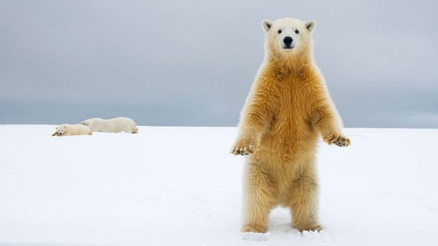 BBC - Earth - Time to bust a myth: not all mammals are warm-blooded