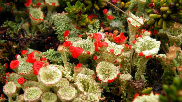 Some of the mosses and lichens in southern Patagonia are found nowhere else on Earth (Credit: Credit: Yanet Medina)