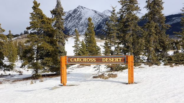 At only 600m wide, Canada's Carcross Desert is said to be the world's smallest desert (Credit: Credit: Mike MacEacheran)