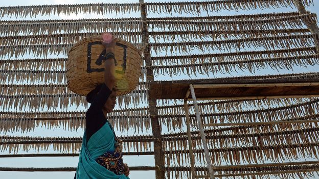 For hundreds of years, Koli fishermen have pegged Bombay duck on large racks by the sea to dry them in the sun (Credit: Credit: Indranil Mukherjee/Getty Images)