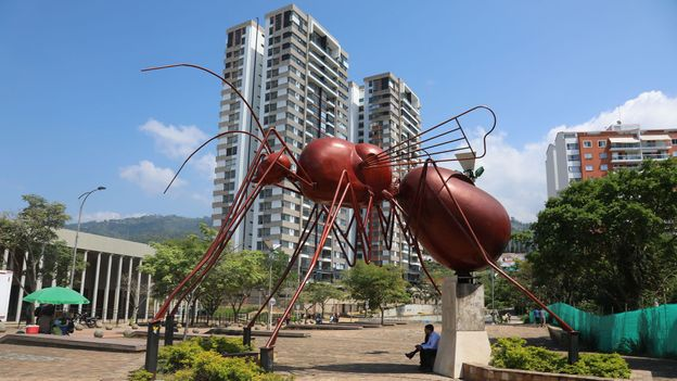 Ants have been eaten in the Santander region for more than 1,000 years and hold a special significance for locals (Credit: Credit: Peter Yeung)