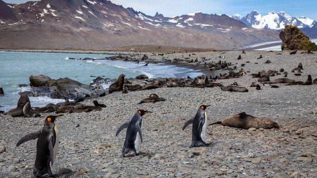 Ice and penguins (Credit: Credit: Bella Falk)
