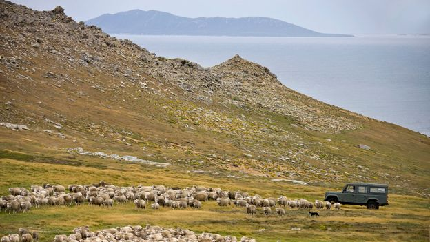 The Falklands are home to about 3,480 people and half a million sheep (Credit: Credit: SteveAllenPhoto/Getty Images)