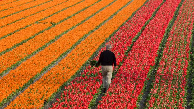 The Netherlands is the loftiest nation on Earth, with Dutch men measuring 182.5cm on average (Credit: Credit: Reza Estakhrian/Getty Images)