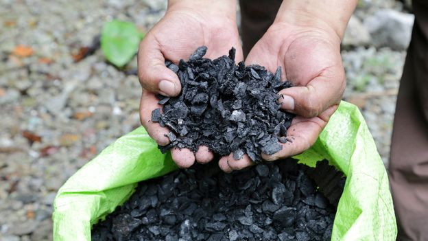 Biochar is used in the reforestation of the Andean cloud forest (Credit: Credit: Elisa Parhad)