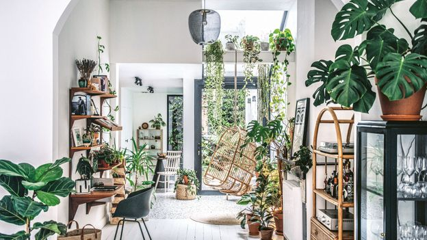 Why living with and tending plants is good for you