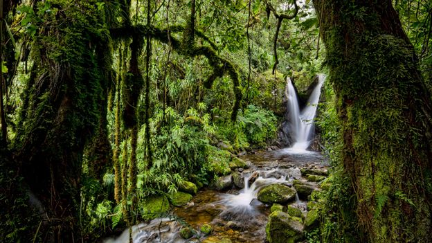 Locals hope that the revitalised trails and camps will entice tourists to return to the region (Credit: Credit: Morgan Trimble/Getty Images)