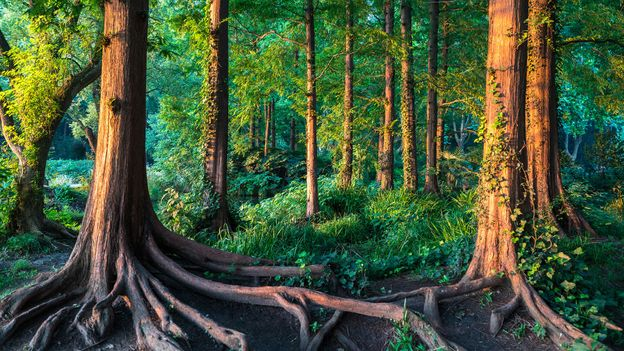 The tiny forests designed by feng shui
