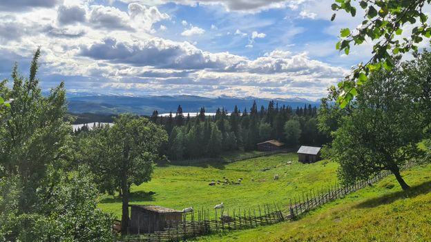 Summer farms like Skallskog are inextricably linked to the ancient Swedish singing tradition of kulning (Credit: Credit: Justin Calderón)
