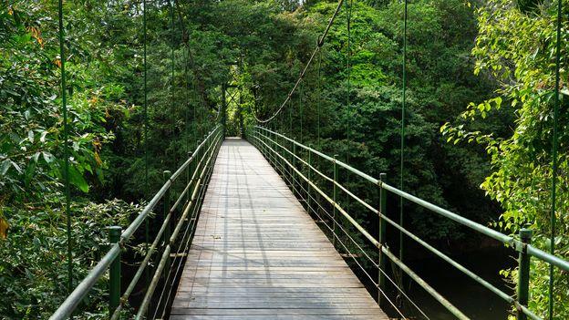 A chain-linked suspension bridge spans the Costa Rica's Sarapiquí River (Credit: Credit: Nigel Francis/Alamy)