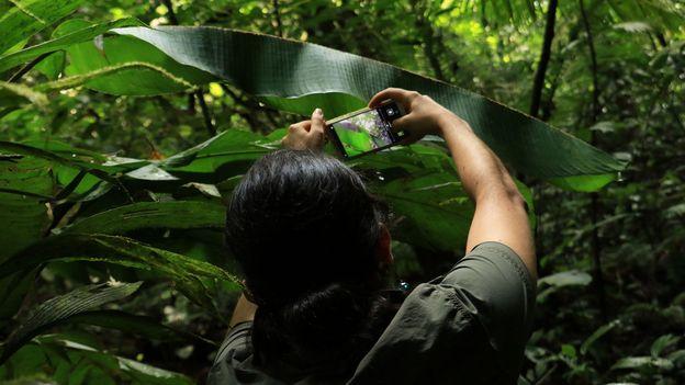 In Sarapiquí, building awareness around conservation has taken time (Credit: Credit: Emmanuel Rojas Valerio)
