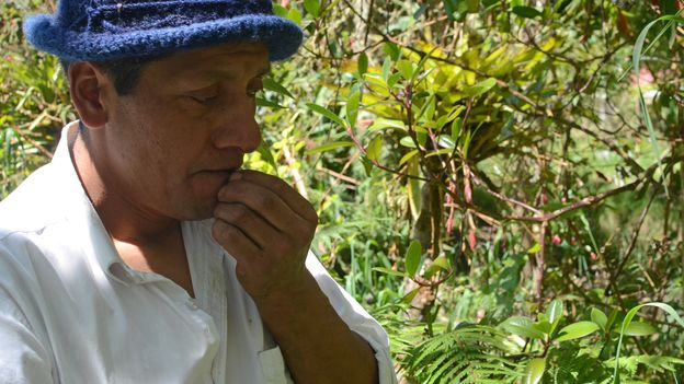 Communities in southern Colombia are increasingly using ancestral seeds as a way to practice Buen Vivir (Credit: Credit: Dimitri Selibas)