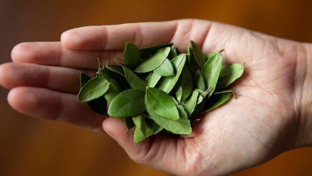 bbc.co.uk - Matt Stirn - Yaupon: The rebirth of America's forgotten tea