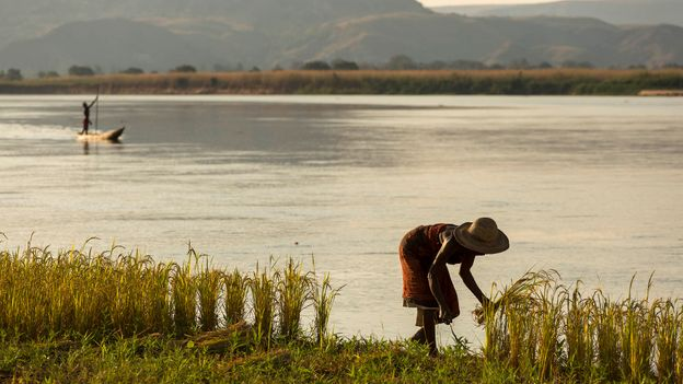Madagascar has long been a melting pot where both African and Asian rice is cultivated (Credit: Credit: danm/Getty Images)