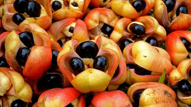 Ackee was brought to Jamaica from West Africa in the 18th Century, most likely on a slave ship (Credit: Credit: Neil Bowman/Getty Images)