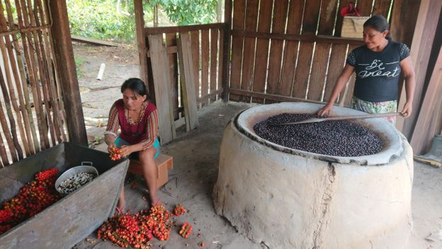 In 2020, the Sateré-Mawé's waraná was awarded a Brazilian Appellation of Origin status (Credit: Credit: Guayapi)