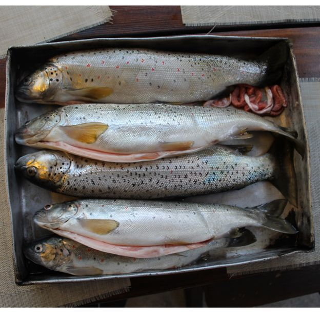 The people of Lake Ohrid have savoured the trout since at least medieval times (Credit: Jessica Bateman)