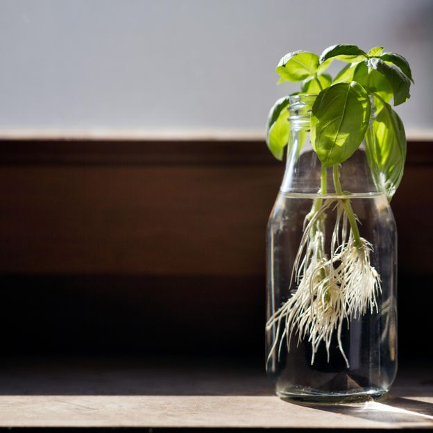 """Some plants do appear to respond to vibrations, chemical signals and sounds, but the idea they can """"communicate"""" is controversial (Credit: Elva Etienne/Getty Images)"""