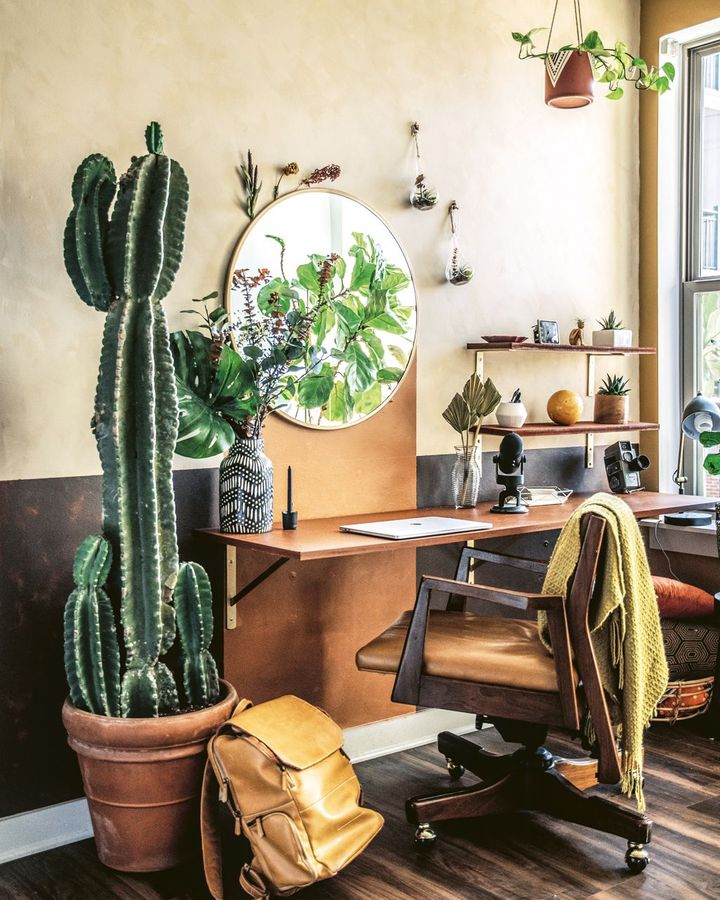 The cactus is the most popular indoor plant on social media (Credit: Hilton Carter/ CICO Books)