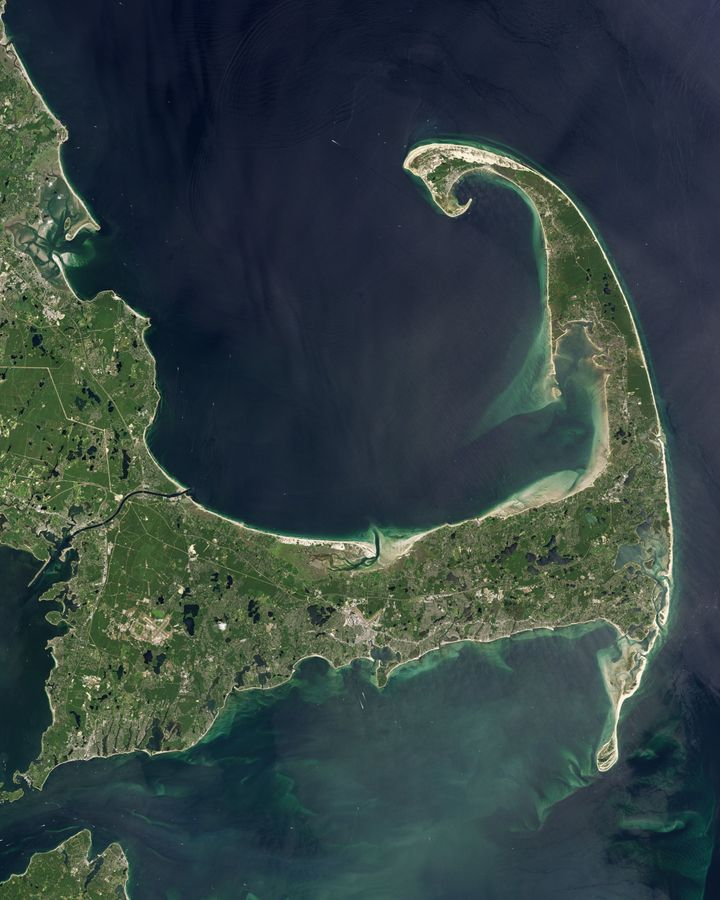 The distinctive curled bicep of Cape Cod, where dolphins are often stranded in shallow waters (Credit: Nasa)