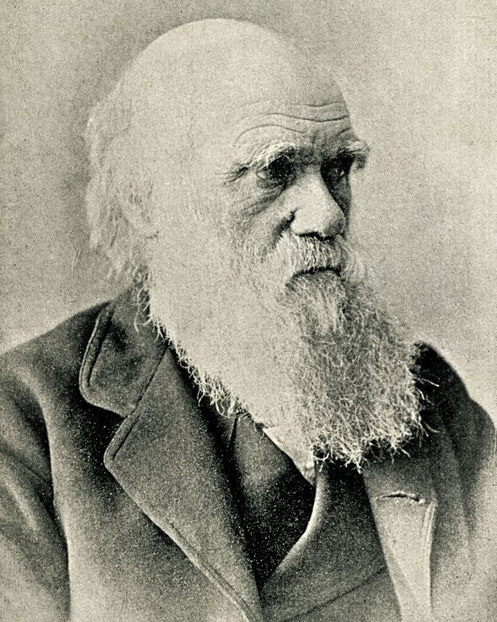 Charles Darwin expounded his theory in a few short notes in a letter to a friend in 1871 (Credit: Getty Images)