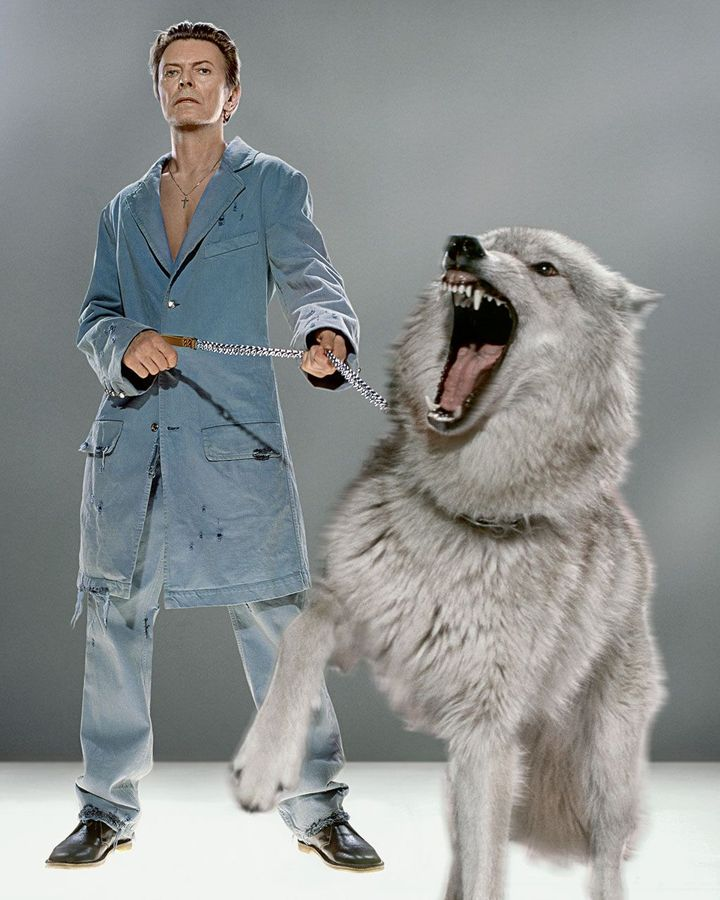 In 2002, Markus Kinko created stunning composite images of Bowie with wild wolves for a GQ magazine shoot (Credit: Markus Kinko)