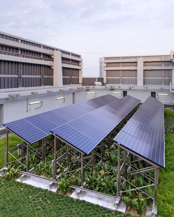 Growing vegetation beneath solar panels helps to cool both the building below and the solar panels above (Credit: Swire Properties)
