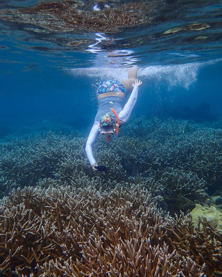 Coral reefs can recover without human intervention, but more slowly. Amid warming seas, they may need all the help they can get (Credit: Fragments of Hope)