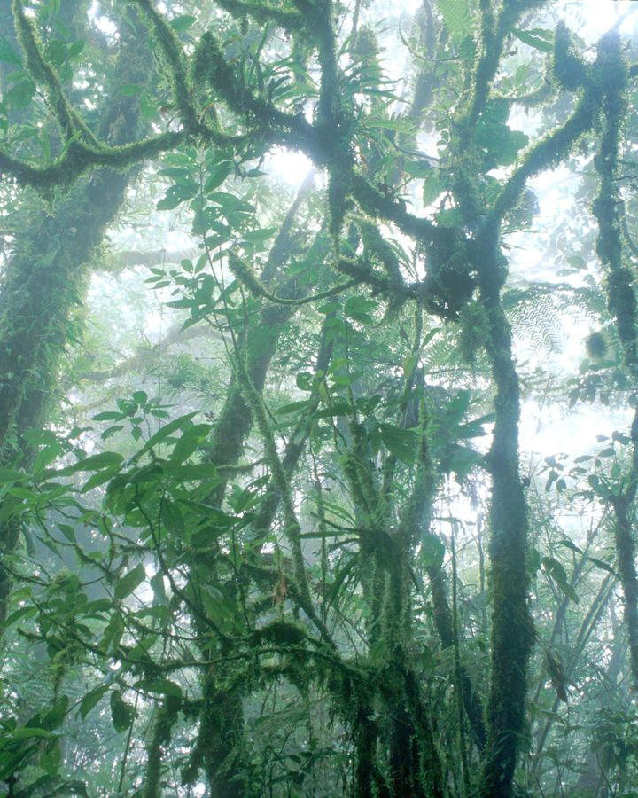 The majestic cloud forests of Monteverde are a well-known tourist attraction, but until now travellers have had few green options to reach the region (Credit: Getty Images)