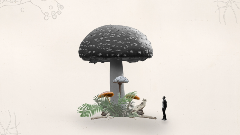 Mycelium Matters: How Mushrooms Can Address Climate Change