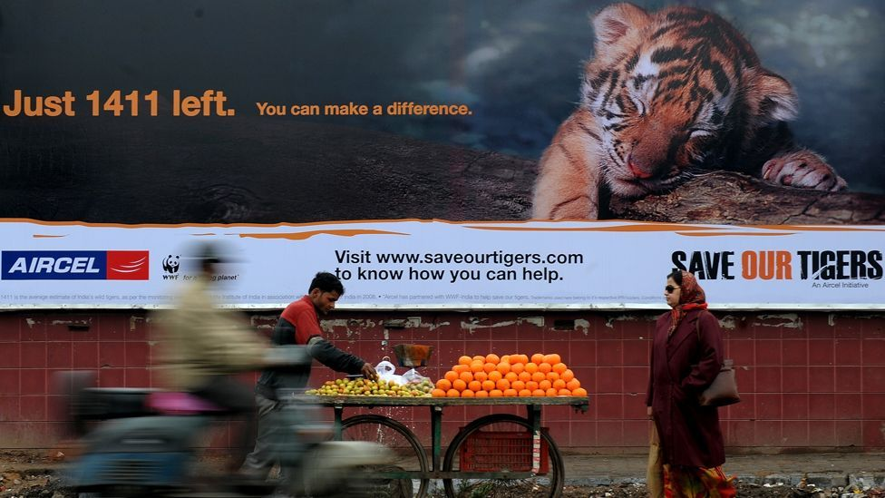 A spate of recent awareness-raising efforts in India provide a constant reminder about the dwindling tiger population. (Copyright: Getty Images)