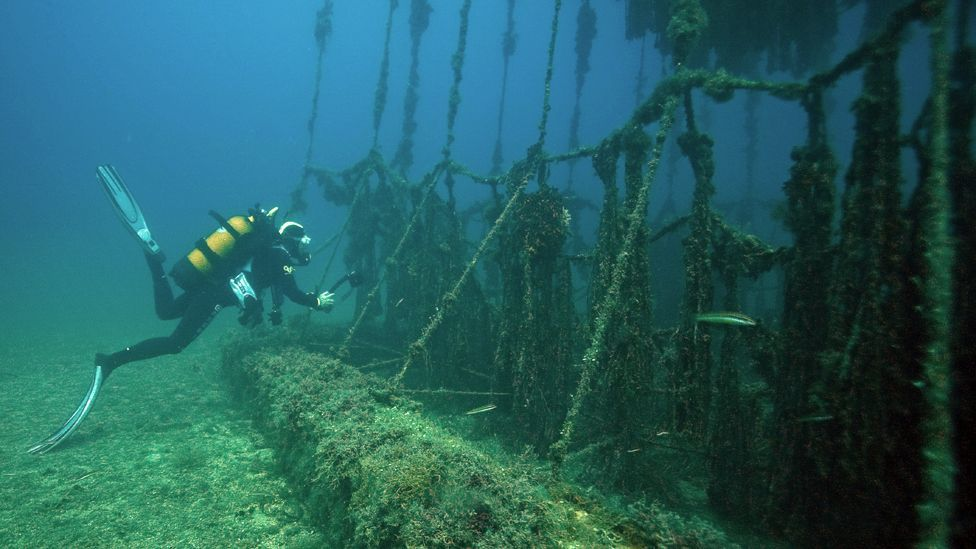 A scientist examines the flora and fauna growing on artificial reefs off the coast of Marseilles (Copyright: Getty Images)