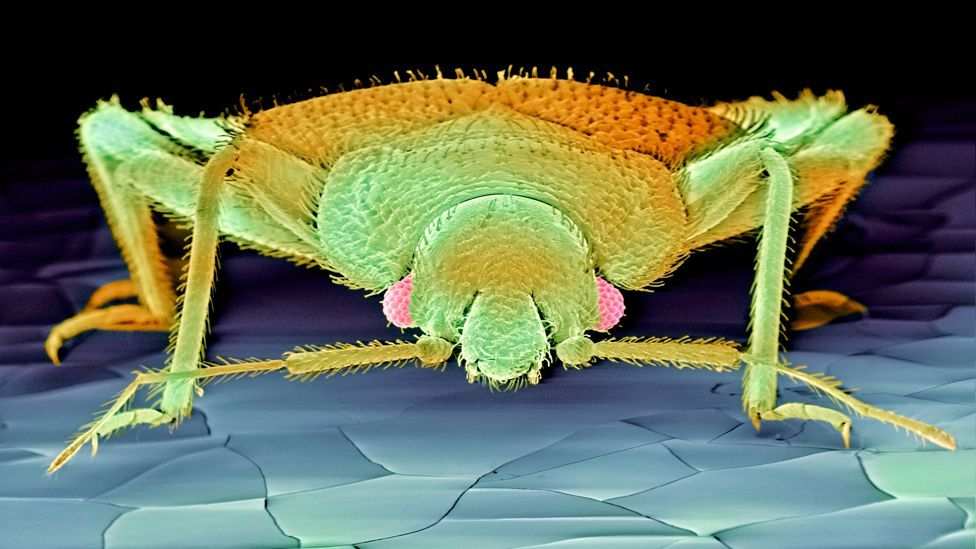 (Copyright: Science Photo Library)