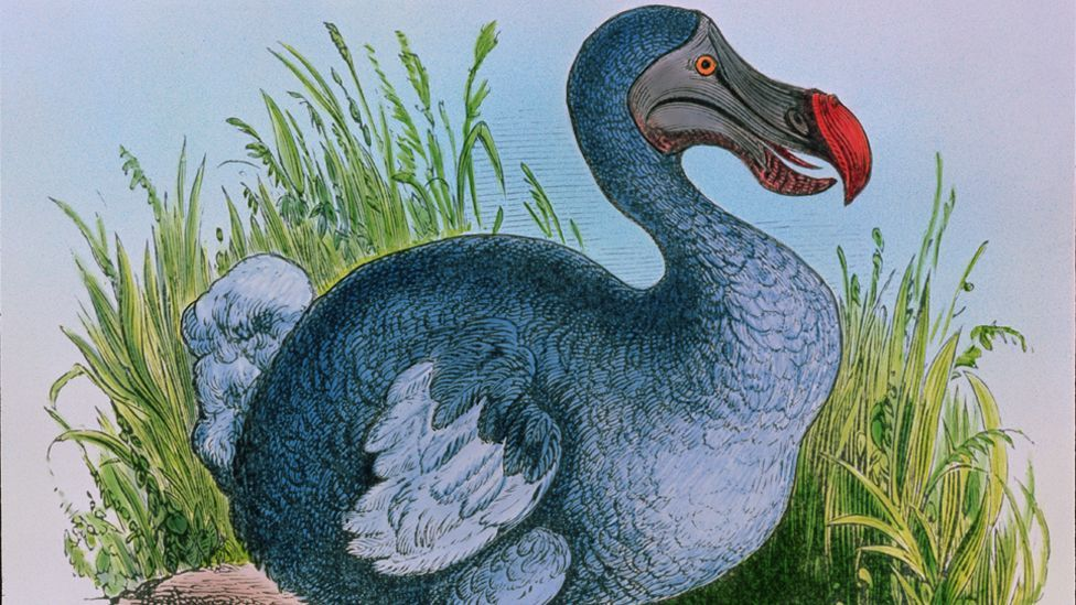 Palaeobiologist Anthony Barnosky fears humans are creating a mass extinction. If so, many species face the prospect of going the way of the Dodo. (Copyright: Science Photo Library)