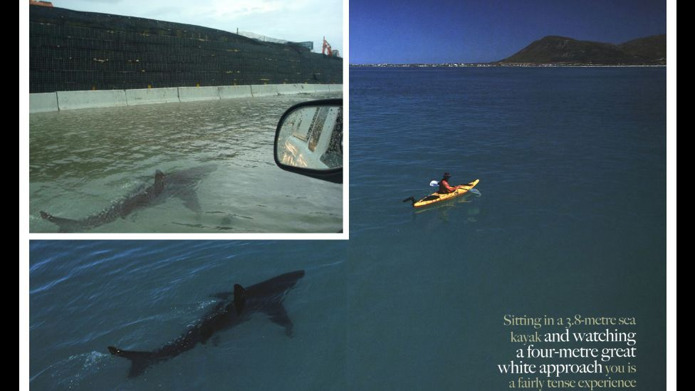 After 2011's Hurricane Irene, a photo of a shark swimming down a flooded Puerto Rican street hit the web. The shark was pasted in from a real encounter. (Courtesy: Fourandsix.com)