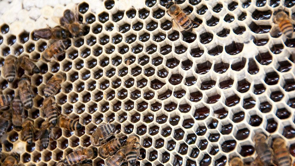 The package costs around $50 for two hives from which a farmer can earn on average of around $175 per year. (Copyright: Jonathan Kalan)