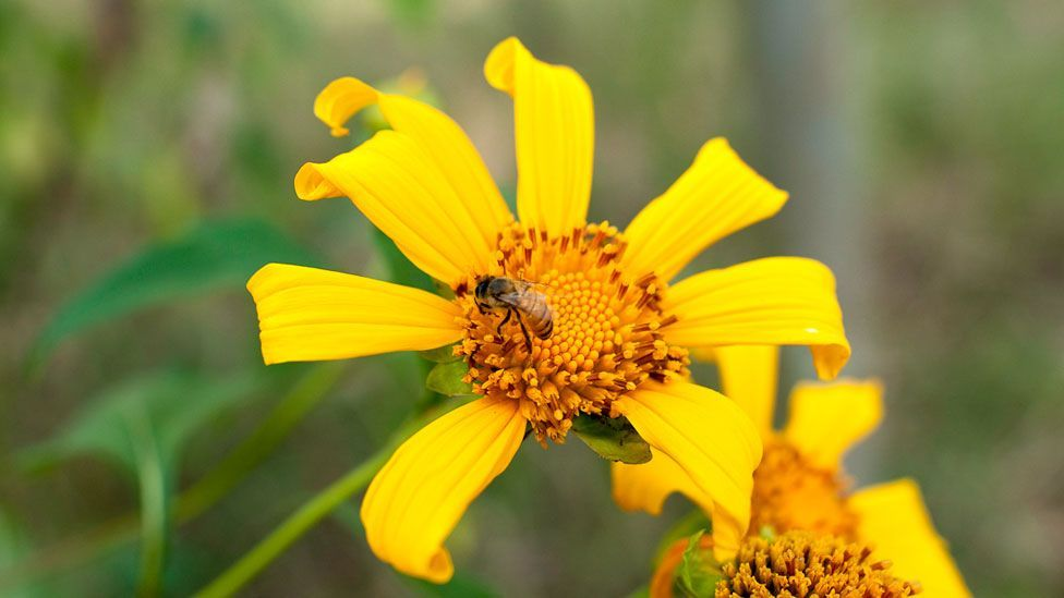 As well as producing a steady source of income, the honey bees also pollinate surrounding crops, increasing yields by 15-20% in some cases. (Copyright: Jonathan Kalan)