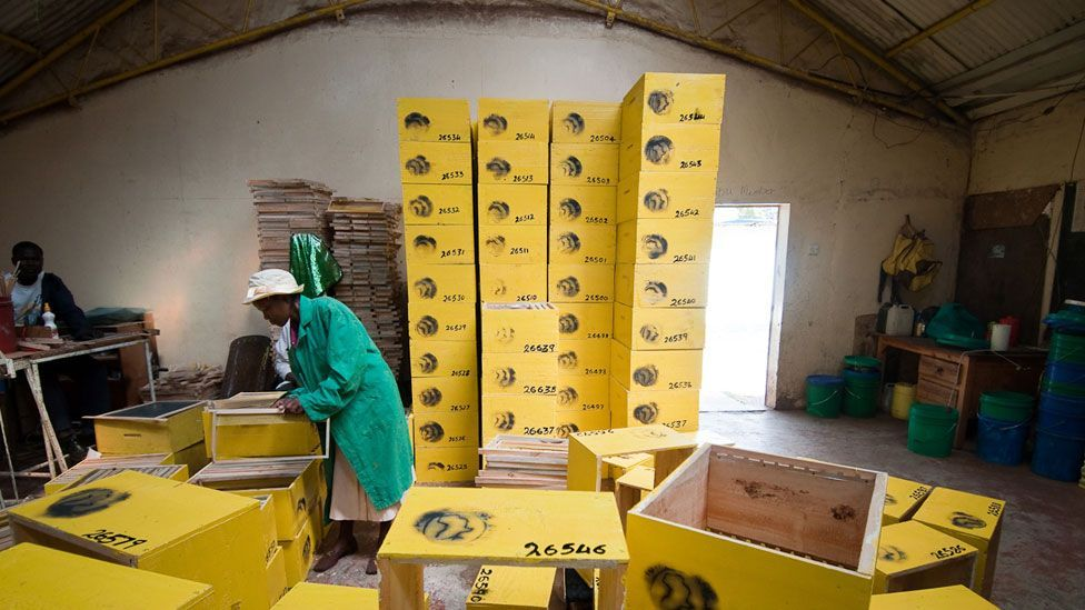Demand for honey is growing in many markets and prices are rising. The global  market is expected to hit $12 billion by 2015. (Copyright: Jonathan Kalan)