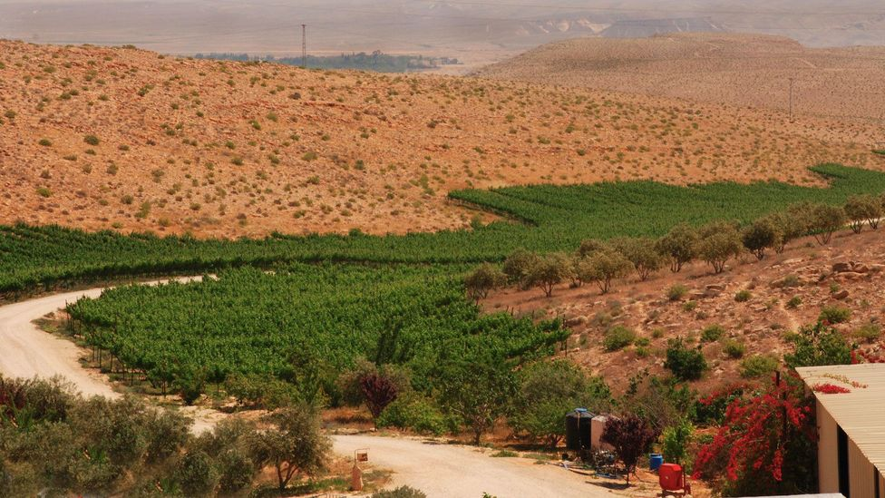 The Carmey Avdat Winery is a family-run, ecological farm that cultivates grapes using ancient irrigation terraces. (Carmey Avdat)