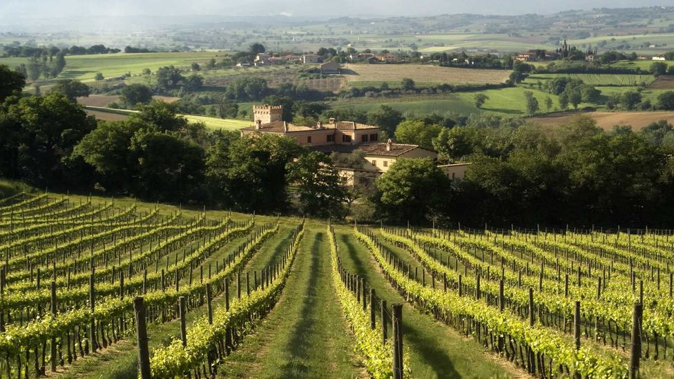 The gently rolling hills, olive groves and vineyards make Umbria the green heart of Italy. (Diana Mayfield/LPI)
