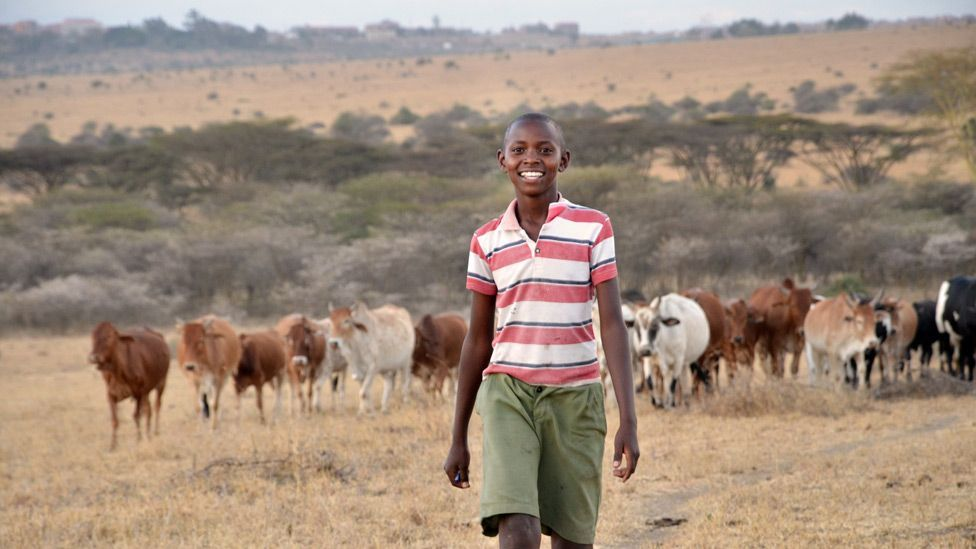 In response to the threat, Richard Turere, aged 11, devised a low-cost low-tech system to keep the lions away from his family's livestock. (Copyright: Paula Kahumbu)