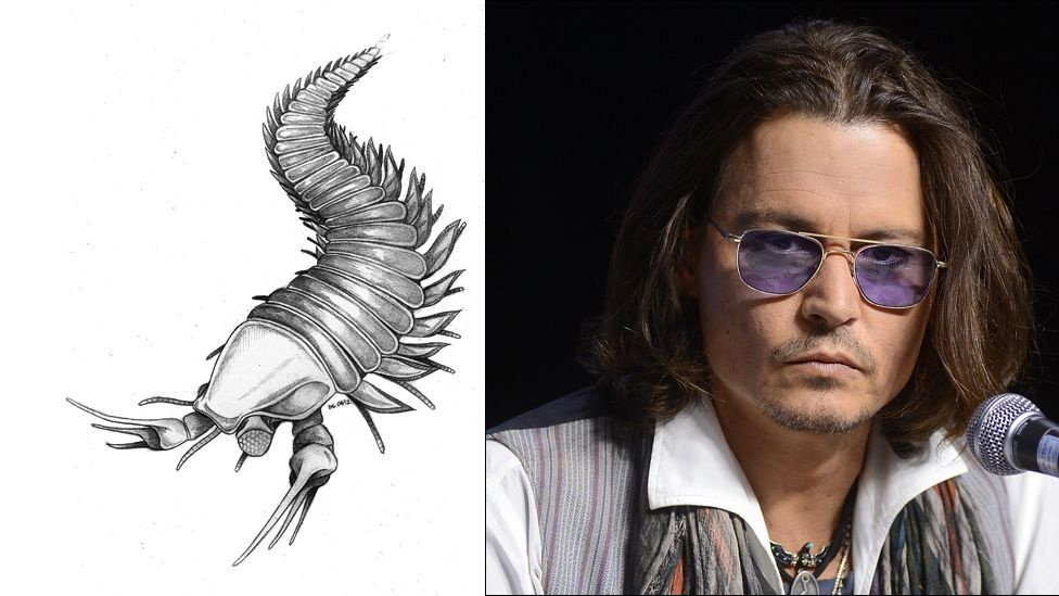 Discovered a huge, scissor-clawed prehistoric arthropod? There's only one thing for it – name it after Edward Scissorhands actor Johnny Depp. (Copyright: Imperial College/Getty)