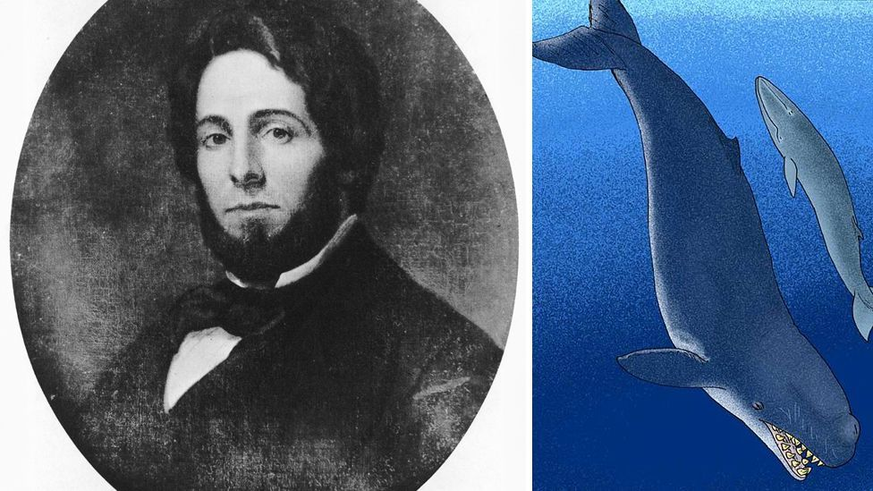Herman Melville penned the classic white whale novel Moby Dick; a species of extinct whale, Livyatan melvillei, was named after him in 2010. (Copyright: Getty/Apokryltaros)