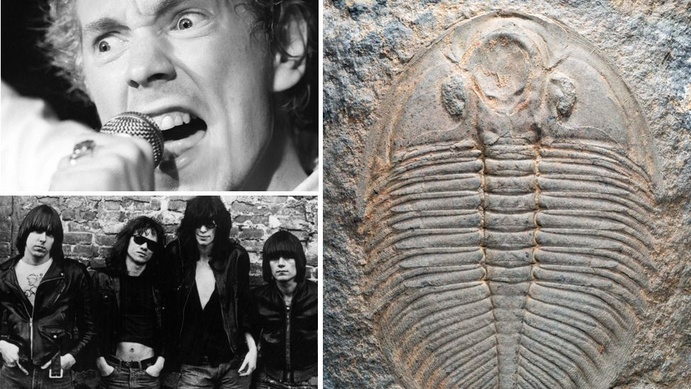 No jokes about rock dinosaurs – species of extinct trilobite have been named after Sex Pistol John Lydon (top left) and members of The Ramones (bottom left). (Copyright: Getty/SPL)
