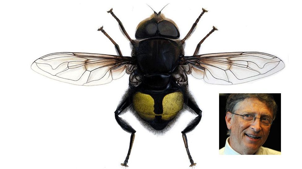 Computing pioneer Bill Gates has had a species of Costa Rican flower fly named after him – as has Microsoft co-founder Paul Allen. (Copyright: Getty/Wikimedia  Commons)