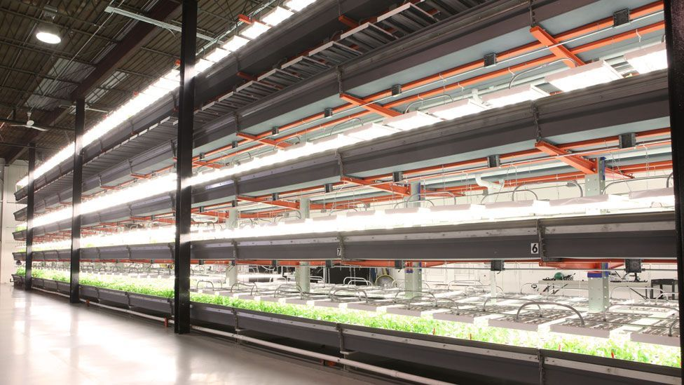 Vertical farms are being planted in cities to grow produce indoors, like this one in a former Chicago warehouse. (Copyright: farmedhere)